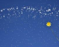 Цветок с запачканной предпосылкой воды Стоковое Изображение
