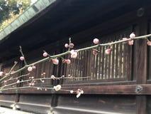Цветок сливы Стоковое фото RF