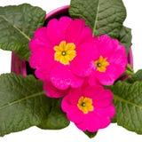 Цветок с листьями Стоковые Фотографии RF