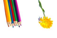 Цветок с много ярких карандашей Стоковые Фотографии RF