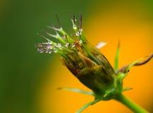 Цветок с падениями воды Стоковые Изображения RF