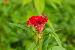 Цветок с пчелой Стоковая Фотография