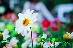 Цветок с пчелой Стоковое фото RF