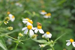 Цветок с пчелой Стоковое Изображение RF