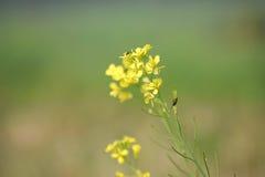Цветок с пчелой Стоковое Изображение