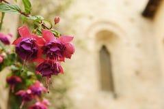 Цветок с церковью в предпосылке Стоковое Изображение RF