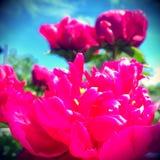 Цветок темы Стоковые Изображения
