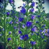 Цветок темы Стоковое фото RF