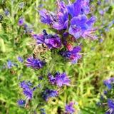 Цветок темы Стоковое Фото