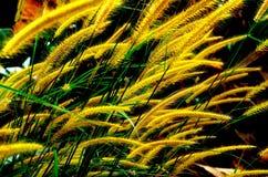 Цветок травы - желтый цвет Стоковые Изображения