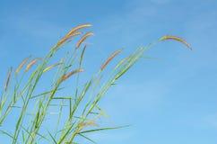 Цветок травы Стоковое Фото