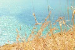 Цветок травы на скале и море Стоковое Изображение RF