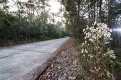 Цветок травы на стороне дороги стоковые изображения