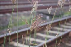 Цветок травы, предпосылка Стоковая Фотография