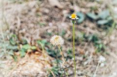 Цветок травы с высушенной травой стоковое фото rf