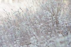 Цветок травы Трава на обочине в мягком фокусе травы Стоковые Фото