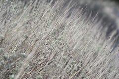 Цветок травы Трава на обочине в мягком фокусе травы Стоковая Фотография