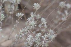 Цветок травы Трава на обочине в мягком фокусе травы Стоковая Фотография RF