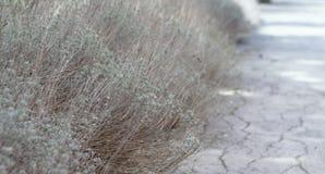 Цветок травы Трава на обочине в мягком фокусе травы Стоковые Фотографии RF