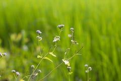 Цветок травы Стоковое Изображение
