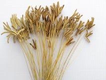 Цветок травы Стоковые Фотографии RF