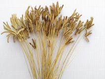 Цветок травы Иллюстрация вектора