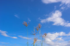 Цветок травы Стоковые Фото