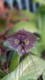 цветок тропический Стоковое Изображение RF