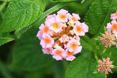 цветок тропический Стоковые Изображения RF