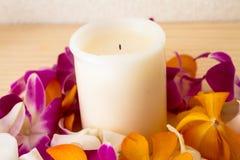 цветок тропический Стоковая Фотография