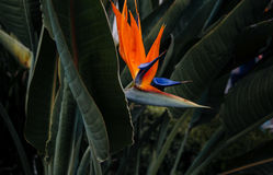 цветок тропический Стоковое Фото