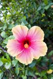 цветок тропический Стоковые Изображения