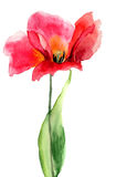 Цветок тюльпана Стоковое Фото