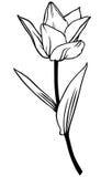 Цветок тюльпана контура красивый иллюстрация вектора