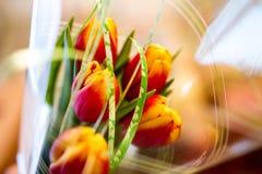 Цветок тюльпана пинка Bautiful Стоковое фото RF
