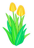 Цветок тюльпана Стоковое фото RF