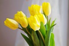 Цветок тюльпанов Стоковое Изображение RF