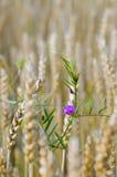 цветок уединённый Стоковая Фотография RF