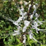 цветок уникально Стоковая Фотография