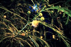 Цветок луны Стоковые Фотографии RF