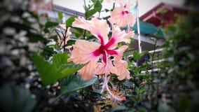 Цветок утра Стоковые Изображения