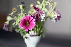 Цветок фуксии покрашенный и вянуть Стоковое Изображение