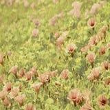 цветок холстины пляжа предпосылки искусства Стоковые Изображения RF