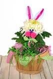 Цветок хризантемы зайчика пасхи Стоковые Изображения RF