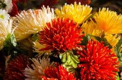 цветок хризантемы цветастый Стоковое Изображение RF