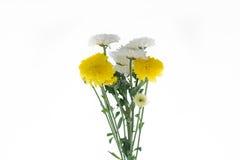 Цветок хризантем Стоковое Изображение