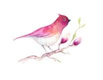 Цветок цветения магнолии картины акварели и обои d птицы Стоковое Изображение