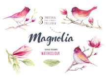 Цветок цветения магнолии картины акварели и обои d птицы Стоковое фото RF