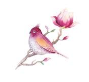 Цветок цветения магнолии картины акварели и обои d птицы Стоковые Изображения