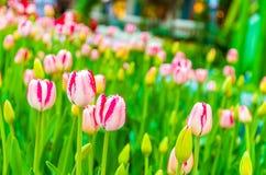 цветок цветения предпосылки цветет белизна неба Стоковые Изображения RF